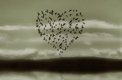 自然界神奇的心形图案