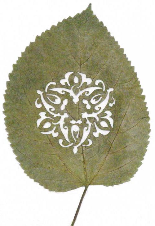 shuye-jiancai-2